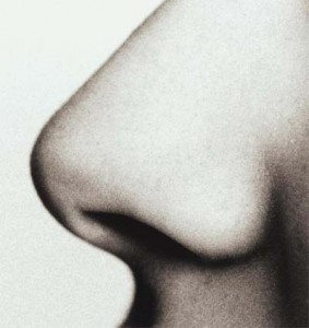 Il naso, l'organo dell'olfatto